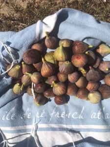 Figs from the Ile de Re